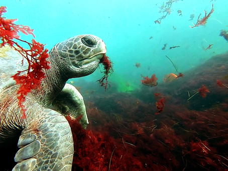 "Lessons of the Sea Turtle: Maximizing Your Chances of a ""Once in a Lifetime"" Encounter"