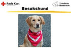 Røde_Kors_Besøksvenn_med_Hund.JPG