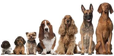 Mange hunder.jpg