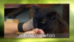 NRK trening av katt.JPG