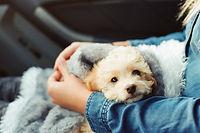 dog traveling in car.jpg