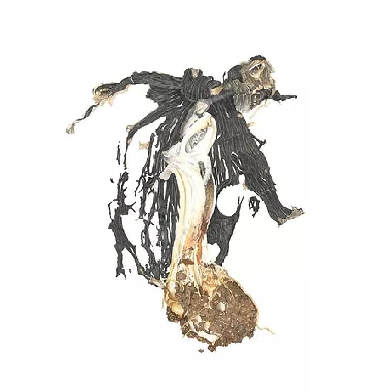 'Exploded' Ink cap fungi