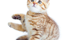 National Cat Day:  'Pawsitively purrfect' holiday helps felines find homes