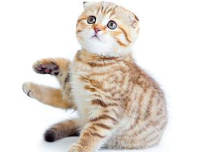 Votre chat vous mord dès que vous le caressez : c'est un chat « caressé mordeur »