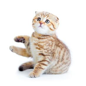 חסימות דרכי שתן בחתולים | על המחלה והדרכים למניעתה