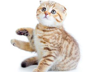 """""""Lo stress e i problemi comportamentali dell'infanzia del gatto"""""""