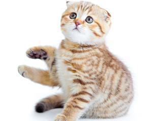 Intestinal Parasites in Cats