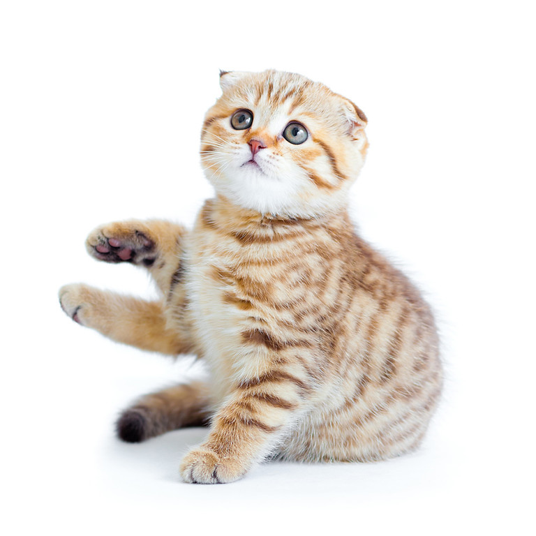 Webinário - Comunicação Felina