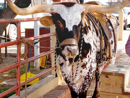 Fort Worth: The Legendary History of the Stockyards