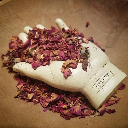 Moroccan Rose Bud