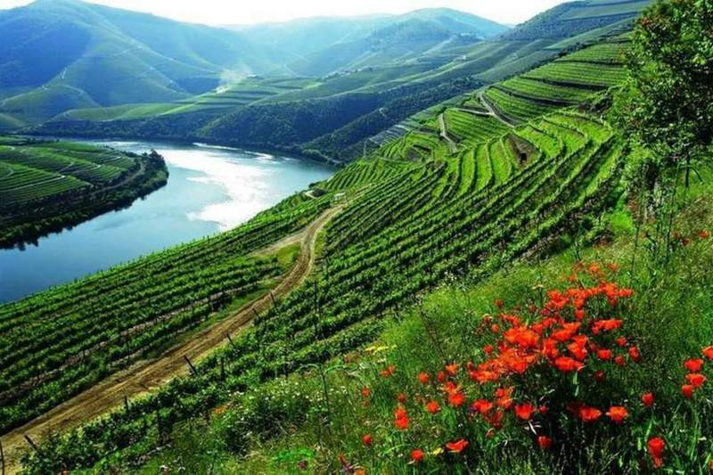 Have your family holidays in Portugal to visit the Douro River landscapes and locally taste the Port Wine