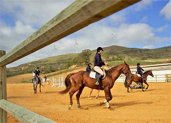 riding horses in riding school