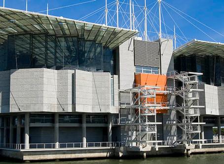 The World's best: Lisbon Oceanarium, a must see