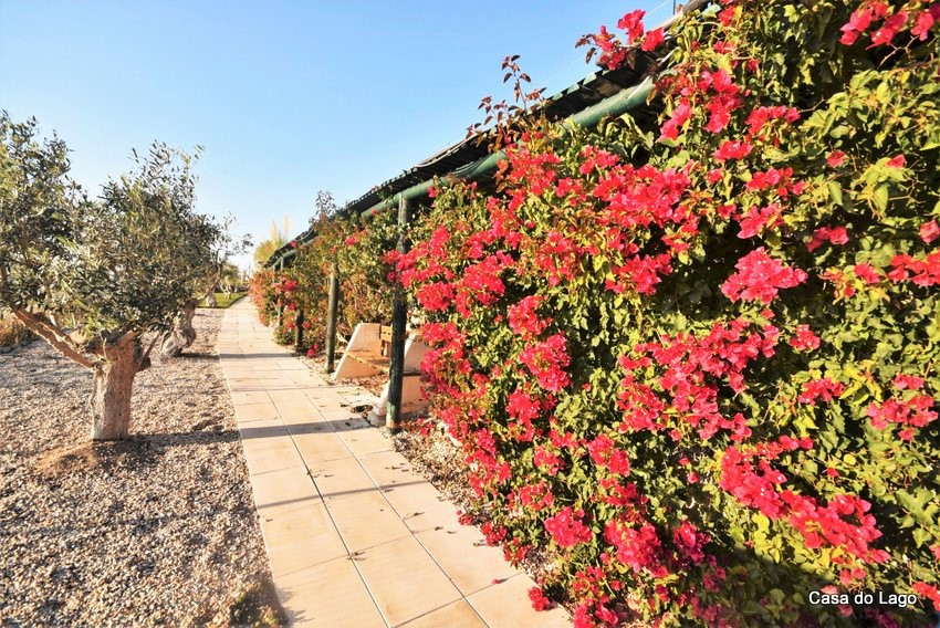 flowers wall in the villa casa do lago, in winter time