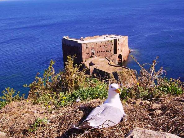 Fortress in Berlenga Island