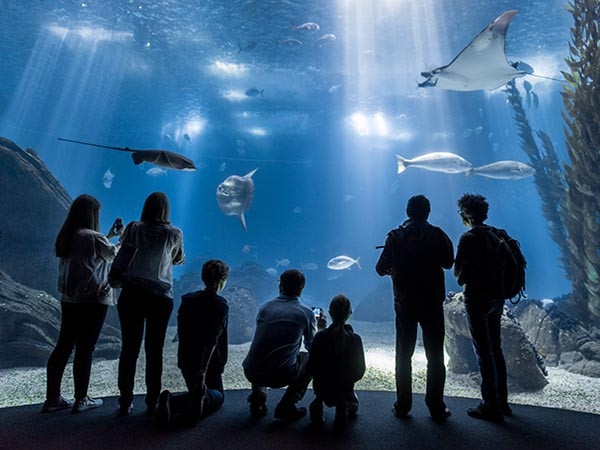 Lisbon aquarium and Oceanarium