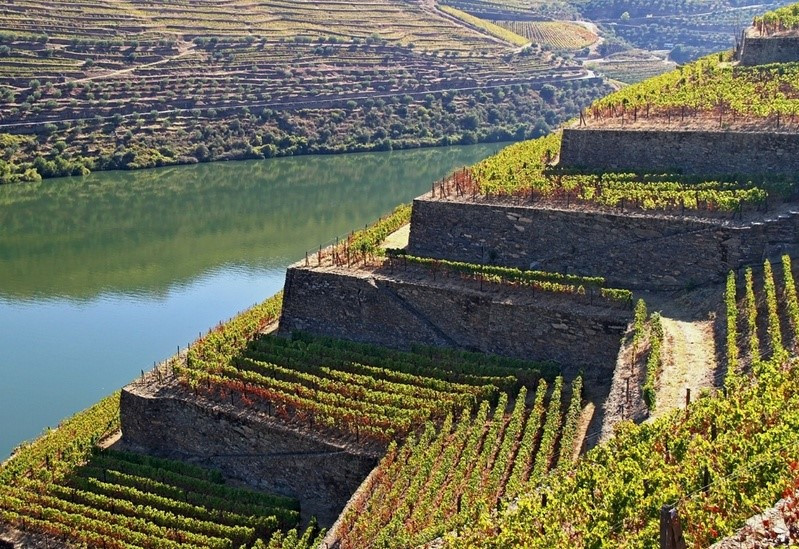 Have holidays in Portugal to visit the Douro River and the Port wine wineyard terraces, built in hard rock by manual labour