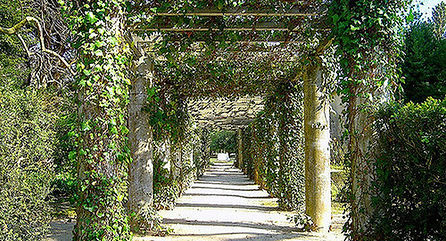 picturesque green tunnel at D. Carlos Park