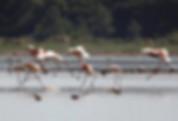 Obidos lagoon: bird watching paradise
