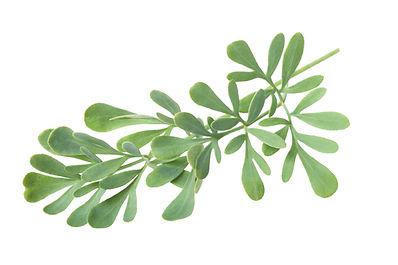Herbs of Grace
