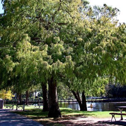 Botanic Gardens - Benowa