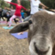 Gaby goat yoga.jpg