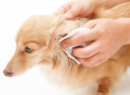 Cosa ci dice la cute del nostro animale sul suo stato di salute