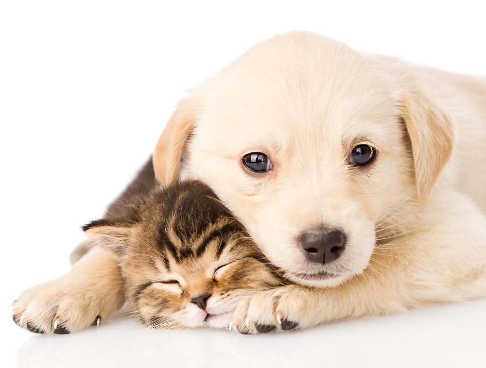dermatite-cane-gatto