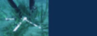 modulo ancoraggio sviluppato dalla Biosurvey in collaborazione con IDEA