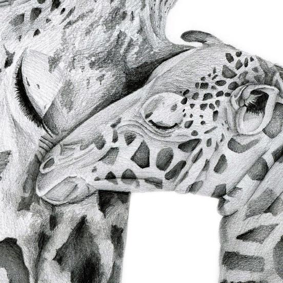 Giraffe - 9 x 12 -0..jpg