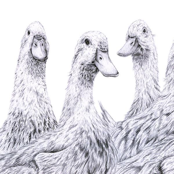 Ducks On Parade - 4.5 x 10.jpg