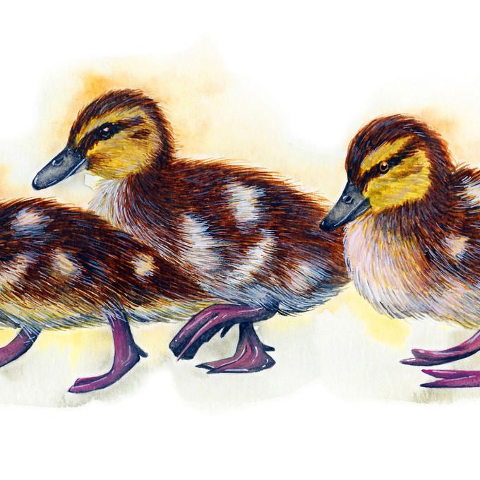 Do The Duckling Walk - 4.5 x 12 +0.25.jp