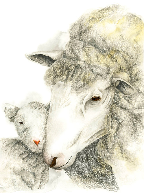 Mothers Love - Sheep