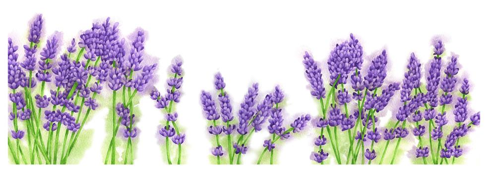 Lavender - 5 x 15 +0.25.jpg