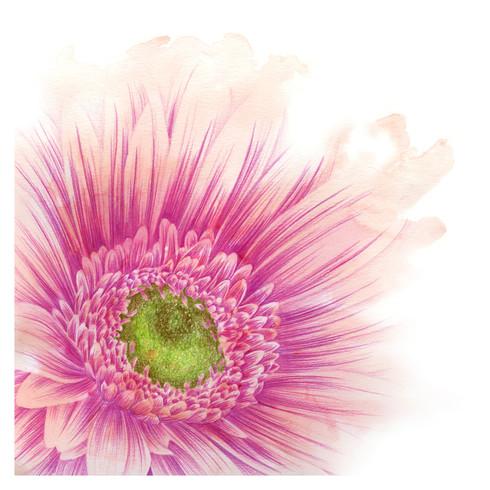 Pink Daisy - 8 x 8 +0.25.jpg