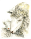 Mom and lamb - 8 x 10 +0.25.jpg