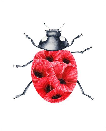 Poppy Ladybug - 8 x10 +0.25.jpg
