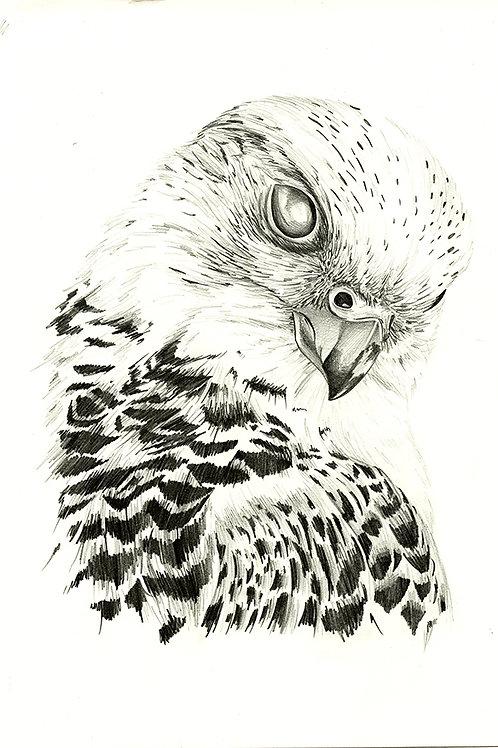 Falcon - Original