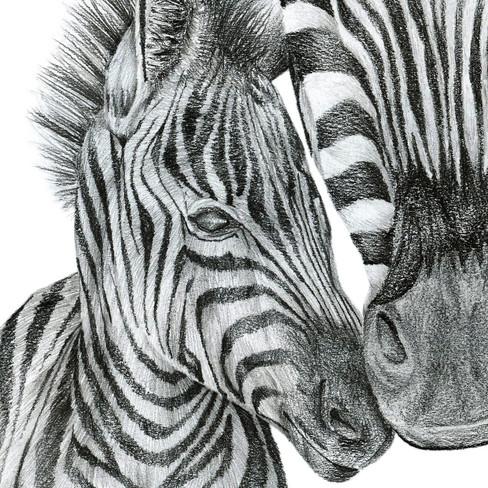 Zebra - 9 x.jpg