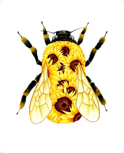 Bumble Bee - 8 x 10 +0.25.jpg