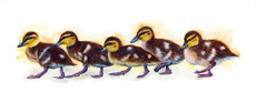 Do The Duckling Walk - 4.5 x 12 +0.25.jp
