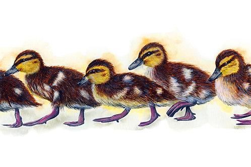 Do The Duckling Walk