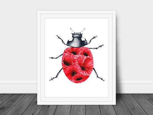 Poppy Ladybug
