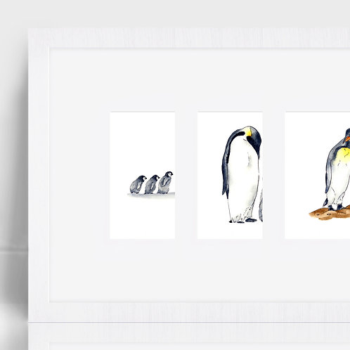 Penguins - Three Prints