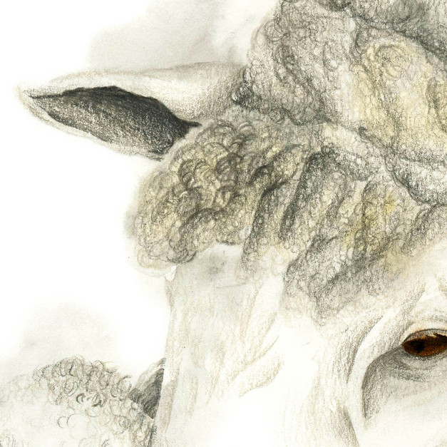 Mom and lamb - 8 x 10 +0.25.jpg