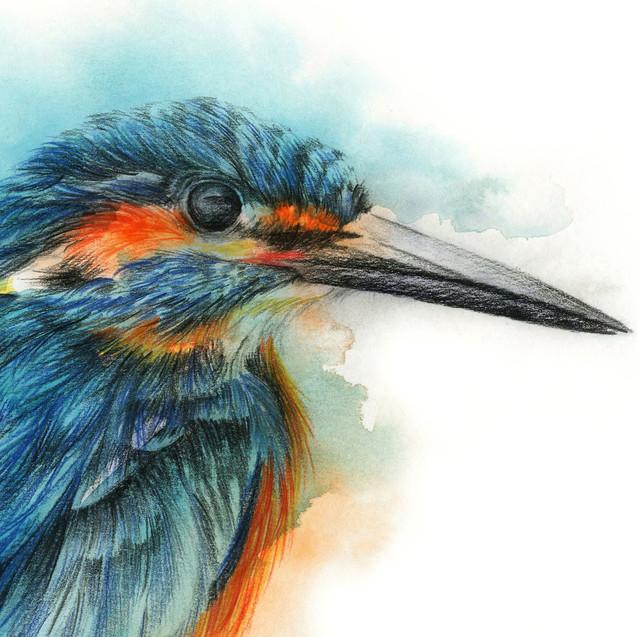 Kingfisher - 9 x12 +0.25.jpg