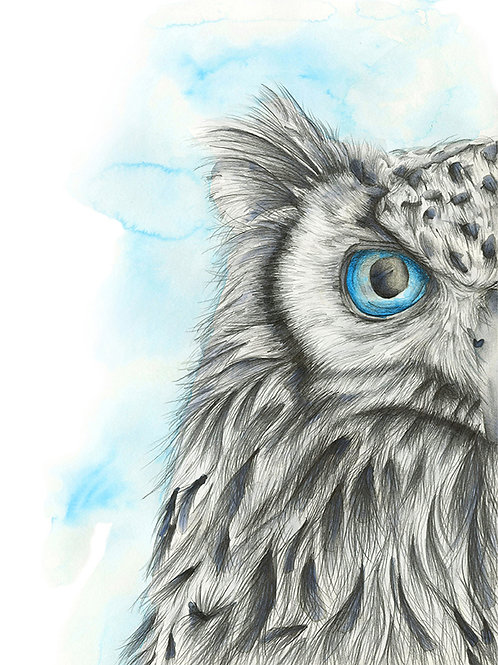 Icy Owl