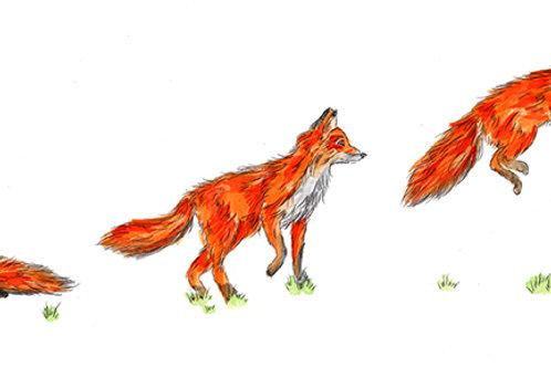 Fox Motion