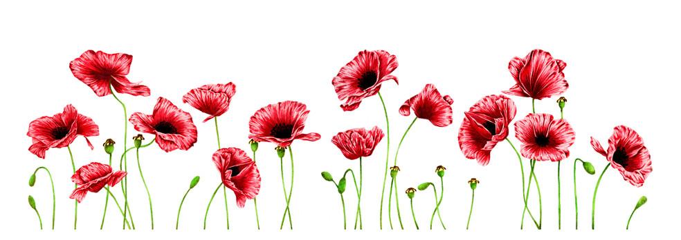 Poppies - 5 x 15 +0.25.jpg