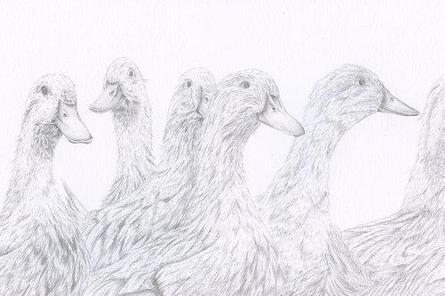 Ducks On Parade - Original
